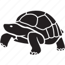 animal, galapagos, pet, slow, tortoise, tortuga, turtle icon