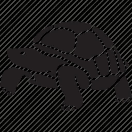 Animal, galapagos, pet, slow, tortoise, tortuga, turtle icon