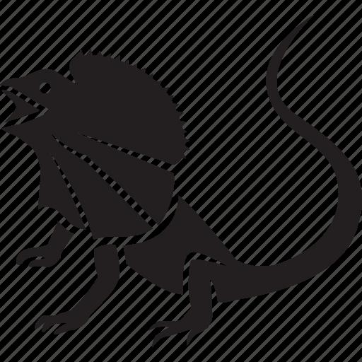 animal, australia, australian, frill, frill-necked, lizard, necked icon