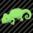 cartoon, chameleon, green, hand, heart, isometric, lizard icon