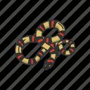 animal, campbell's milk snake, pueblan milk snake, reptile, serpent, snake, vertebrate