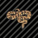 animal, ball python, python, reptile, royal python, serpent, snake icon