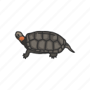 animal, bog turtle, pet, reptile, shell, small aquatic turtle, turtle icon
