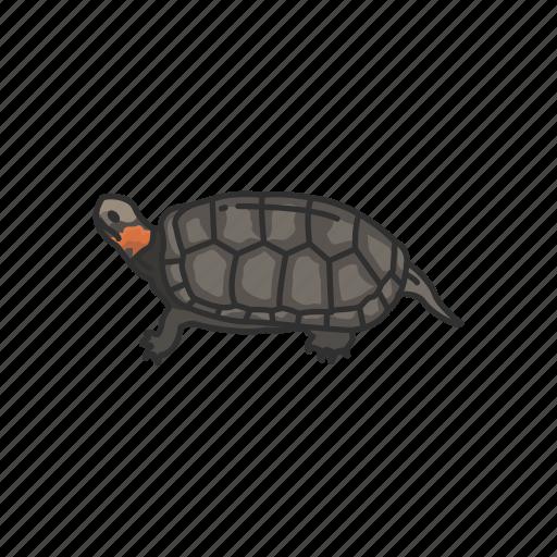 animal, bog turtle, pet, reptile, shell, small aquatic turtle, turtle icon