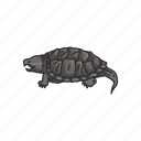 animal, freshwater turtle, reptiles, serpentina turtle, snapping turtle, turtle, vertebrates icon