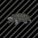 freshwater turtle, animal, vertebrates, serpintina turtle, snapping turtle, turtle, reptile