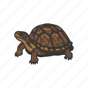 animal, box turtle, pet, shell, terrapene, turtle, vertebrates icon