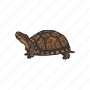 animal, box turtle, reptiles, shell, terrapene, turtle, vertebrates icon