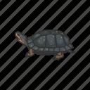 clemmys guttata, reptiles, semi-aquatic turtle, spotted turtle, turtle, vertebrates icon