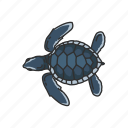 animal, baby sea turtle, hatchling, marine turtle, reptiles, vertebrates icon