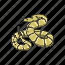 animal, rattlesnake, reptile, serpent, snake, venomous snake, vertebrate