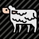 animals, farm, farming, meat, sheep