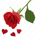 beautiful, love, petals, romance, romantic, rose icon