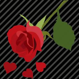 beautiful, love, petals, romance, romantic, rose icon