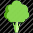 broccoli, vegetable, food