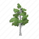 birch, forest, plant, tree icon