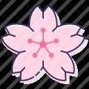 floral, flower, petal, sakura, sakura flower