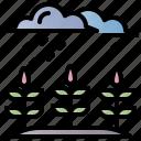 rain, rainy, water, green, nature