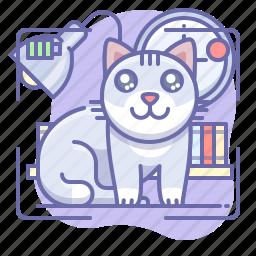 cat, kitty, youtube