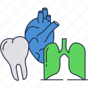 body, heart, human, internal, lungs, organs, teeth icon