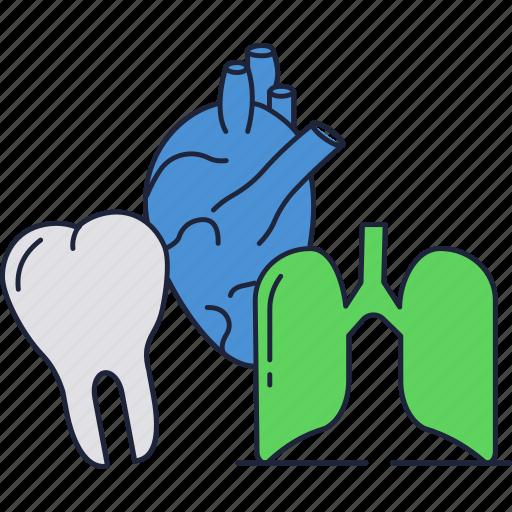 body, heart, human, internal, lungs, organs, teeth icon