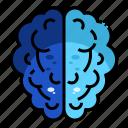 brain, head, intelligence, mind, thinking