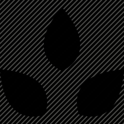 ecology, leaf, leaves, plant, tree icon