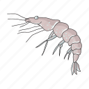 animal, arthropod, marine, shrimp