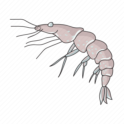 animal, arthropod, marine, shrimp icon