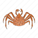 animal, arthropod, crab, marine