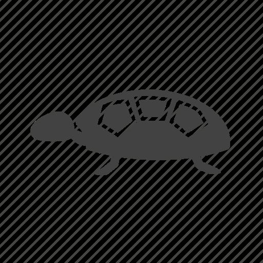 green, nature, sea, shell, tortoise, turtle, wildlife icon