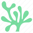 algae, aquatic plant, seaweed, underwater alga, water plant icon