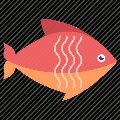aquatic fish, fish, freshwater fish, pet fish, sea life icon