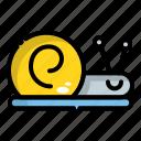animal, sea, snail