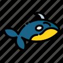 animal, fish, orca, sea, whale