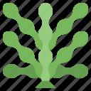 algae, and, food, gastronomy, japanese, restaurant, seaweed icon