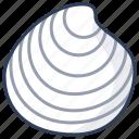 dosinia, shell, sea, seashell, marine
