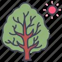 branch, natural, nature, summer, sun, sunnym, tree icon