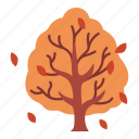 october, autumn, branch, fall, tree, season, leaf