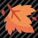autumn, fall, leaf, maple, nature, season icon