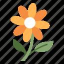 bloom, blossom, floral, flower, fresh, season, spring