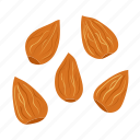 almond, almonds, brown, drawn, ingredient, peeled, seeds icon