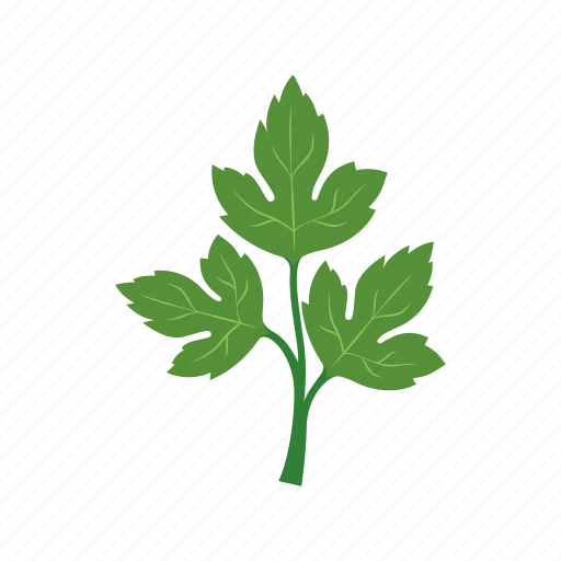cook, dish, food, green, parsley, vegetable, veggie icon