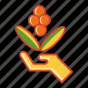 beans, cherry, coffee, originx1, premium, single