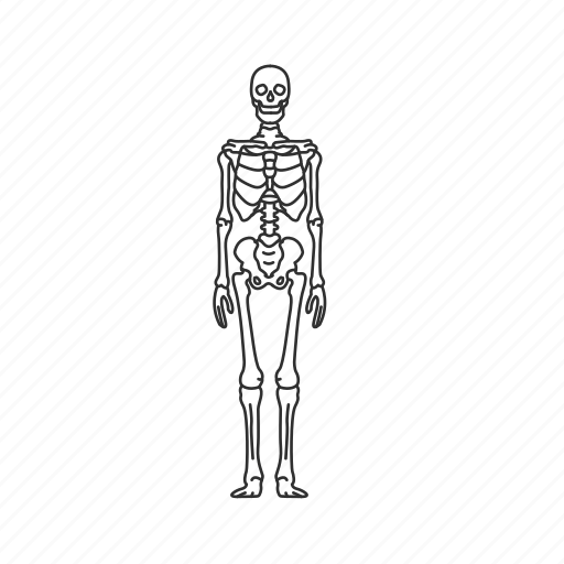 appendicular skeleton, axial skeleton, halloween, human body, human bones, human skeleton, skeletal system icon