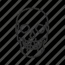cranial bones, cranium, halloween, human skull, skeletal system, skull, temporal bones icon
