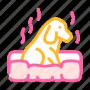 dog, smell, feel, food, sense, cheese