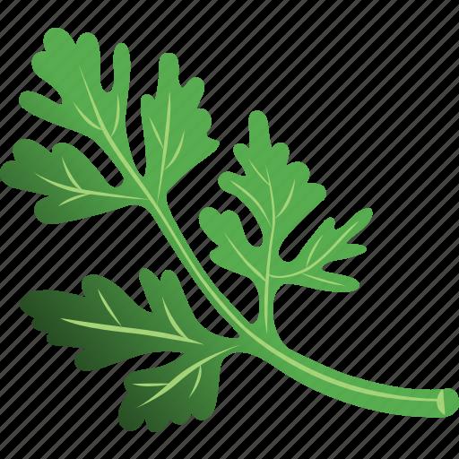 parsley, parsley leaf, parsley sauce, parsley tea, vegetables icon icon