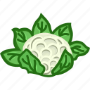 cauliflower, cauliflower leaf, vegetables icon icon