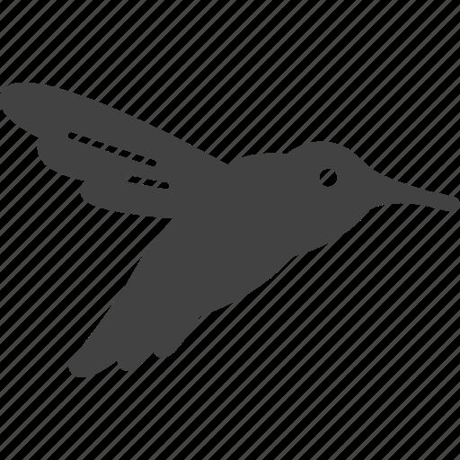 bird, fly, pecker, picker, woodpecker icon